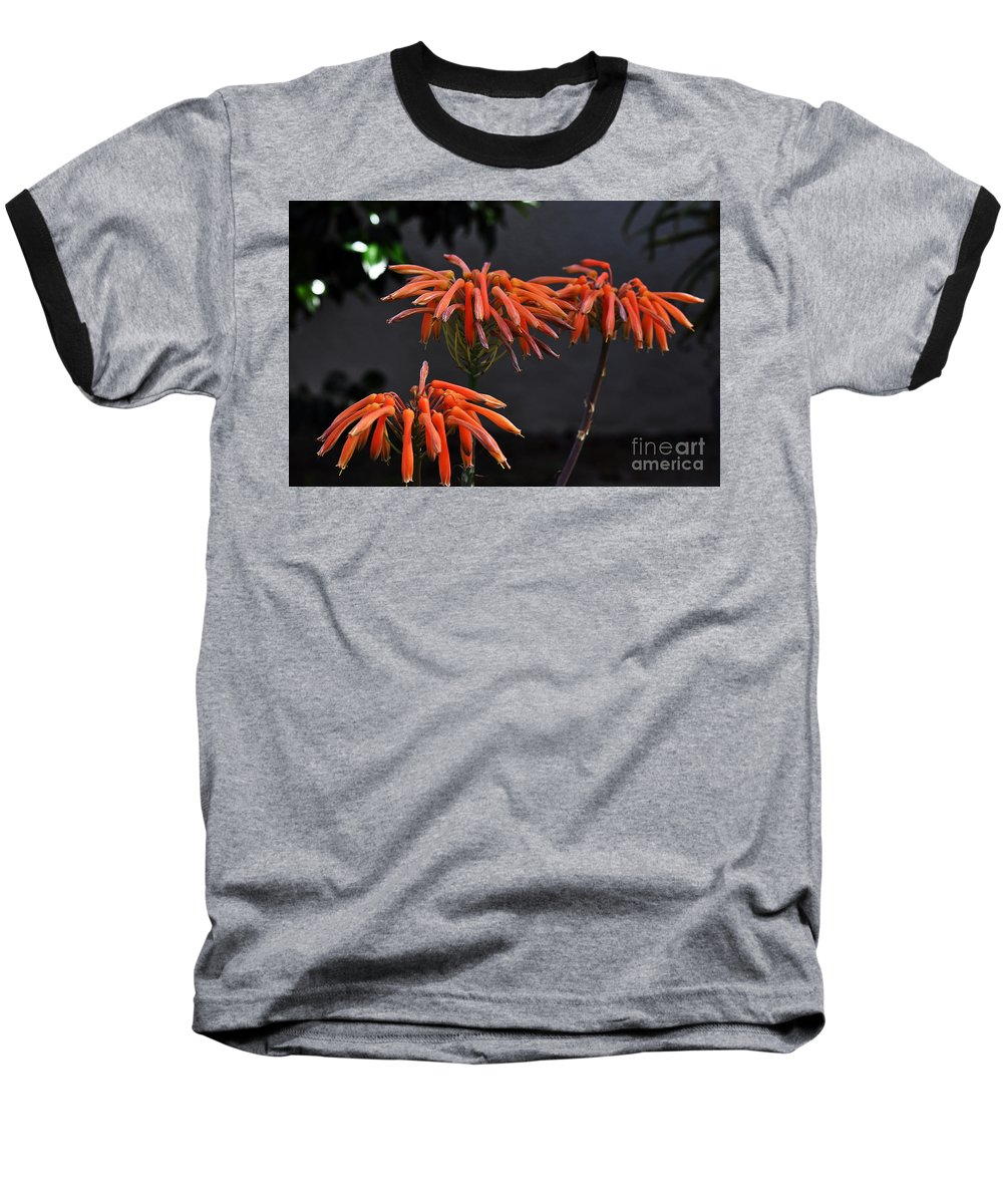 Clay Baseball T-Shirt featuring the photograph Top Of Aloe Vera by Clayton Bruster