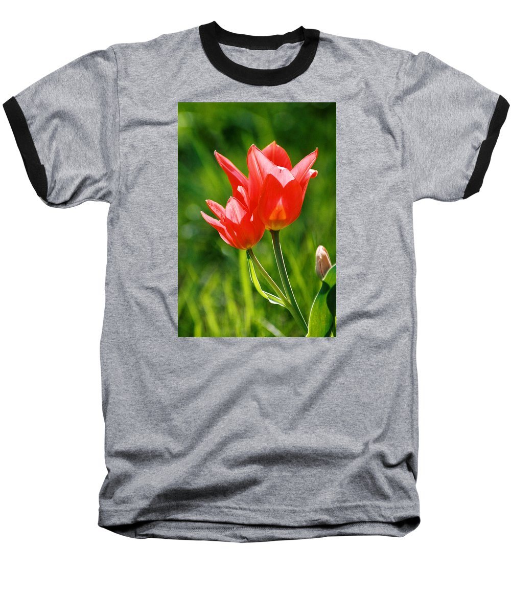 Flowers Baseball T-Shirt featuring the photograph Toronto Tulip by Steve Karol