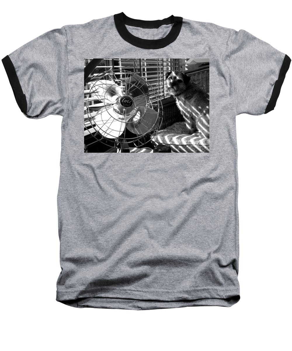 Electric Fan Baseball T-Shirt featuring the photograph Toto Checks In by Charles Stuart