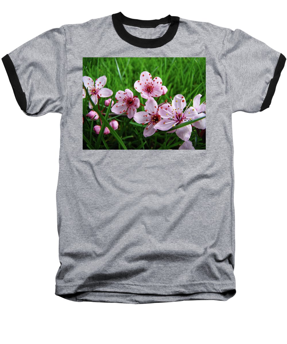 �blossoms Artwork� Baseball T-Shirt featuring the photograph Tree Blossoms 4 Spring Flowers Art Prints Giclee Flower Blossoms by Baslee Troutman