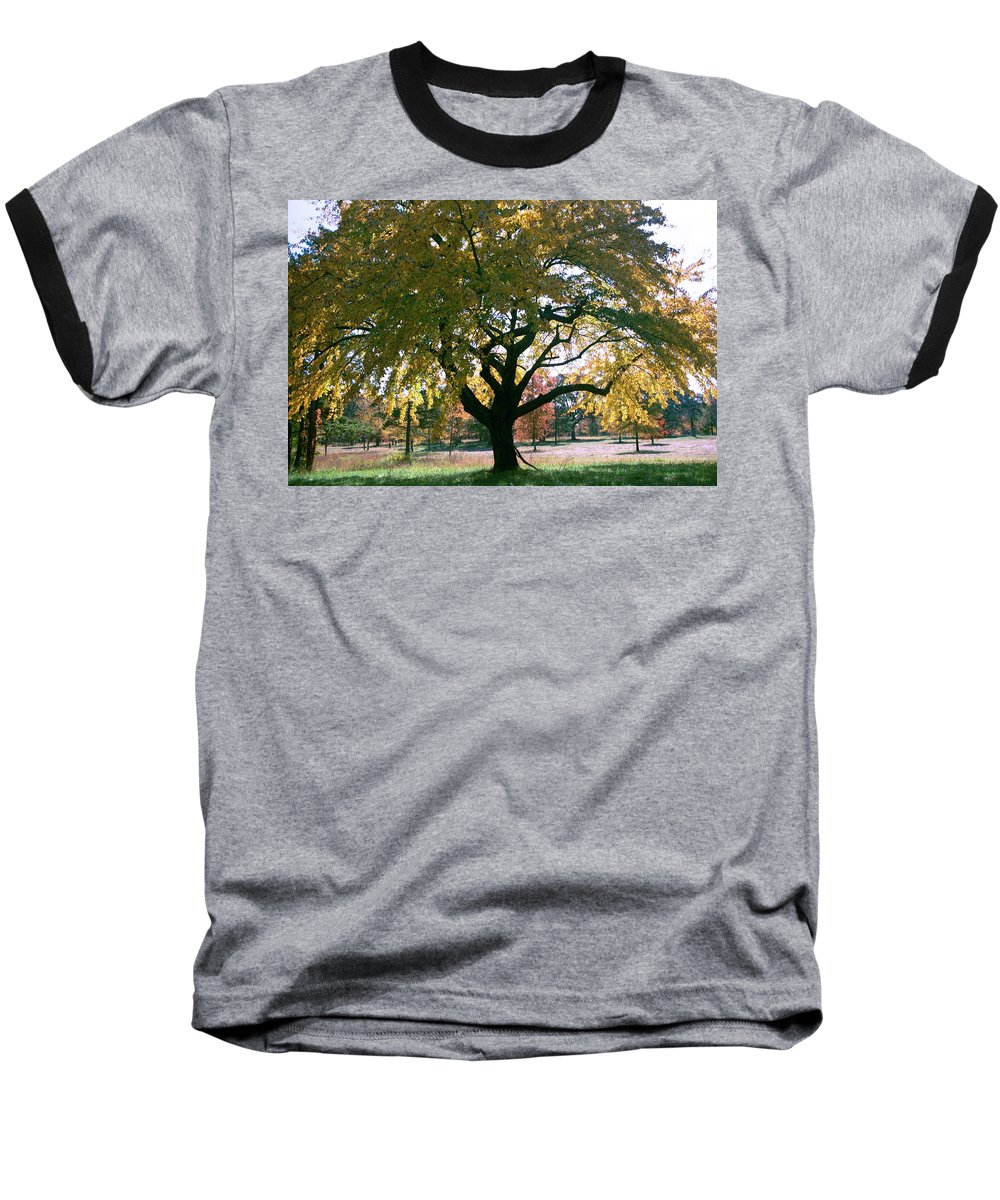 Tree Baseball T-Shirt featuring the photograph Tree by Flavia Westerwelle