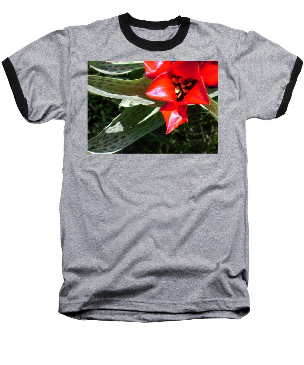 Tulip Baseball T-Shirt featuring the photograph Tulip by Steve Karol