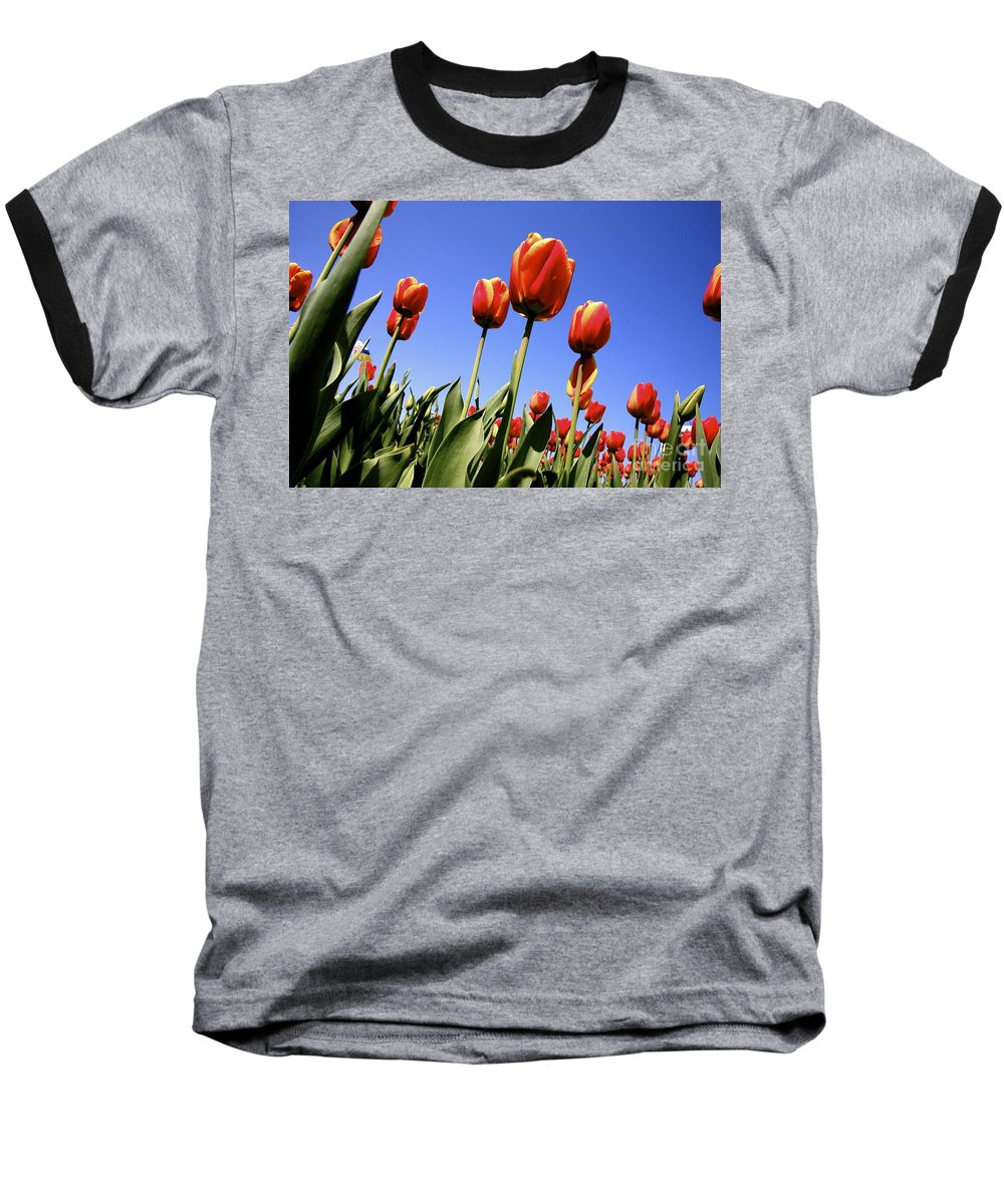 Tulips Baseball T-Shirt featuring the photograph Tulips Time 3 by Robert Pearson