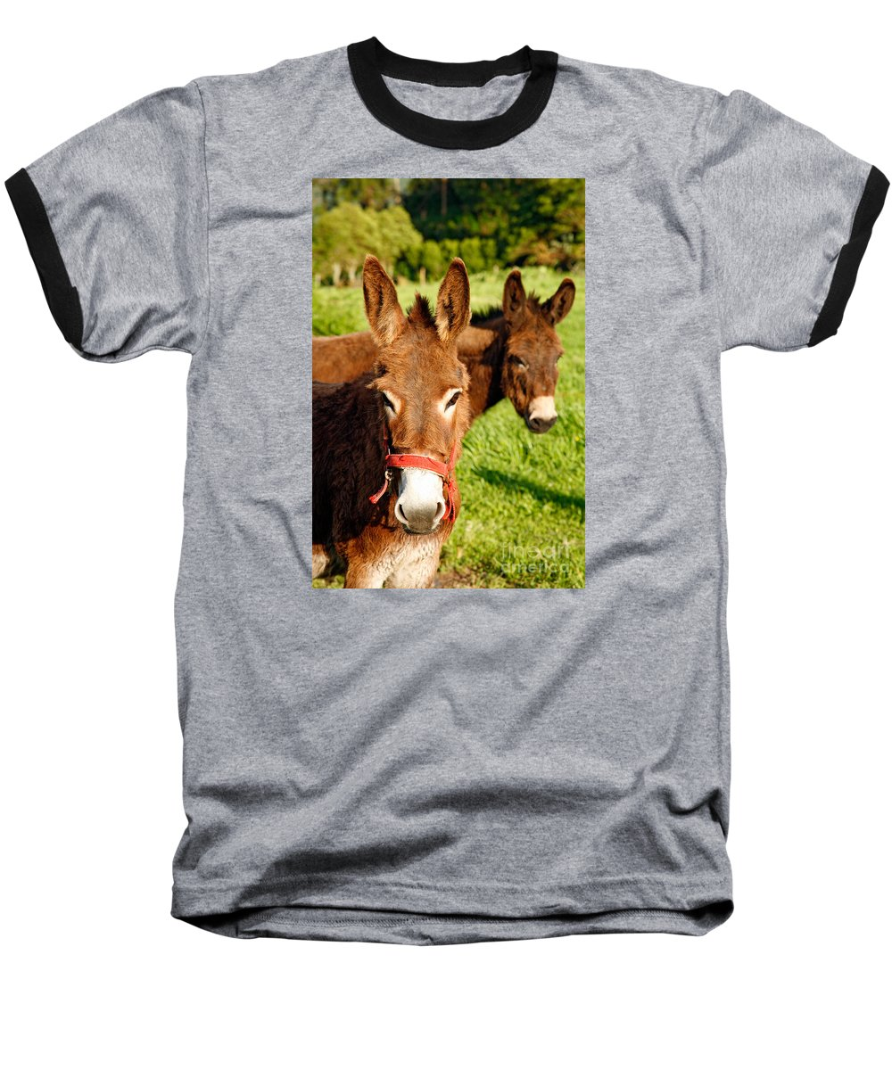 Animals Baseball T-Shirt featuring the photograph Two Donkeys by Gaspar Avila