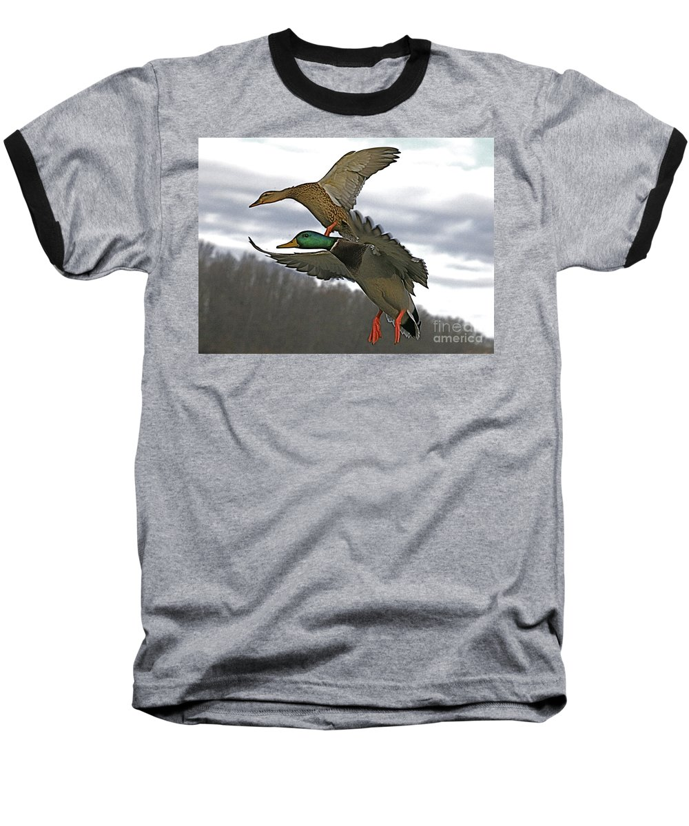 Duck Baseball T-Shirt featuring the photograph Two Land by Robert Pearson