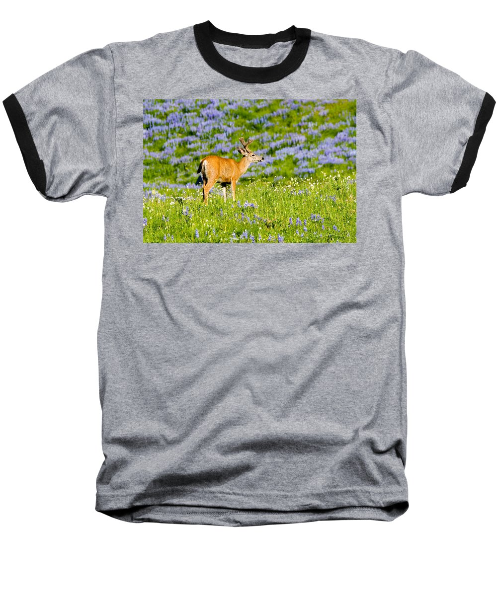 Deer Baseball T-Shirt featuring the photograph Velvet On Lupine by Mike Dawson