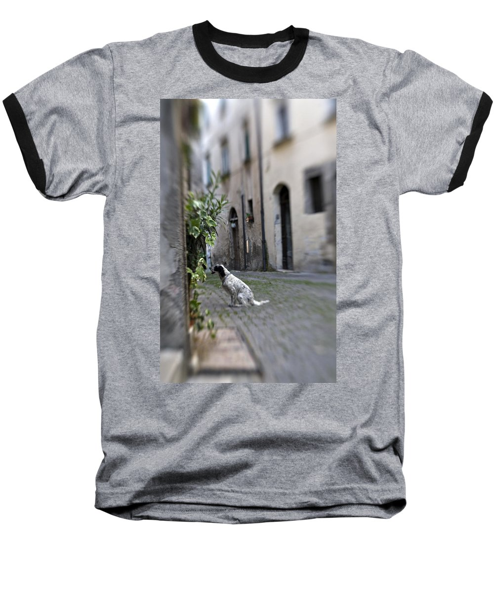 Dog Baseball T-Shirt featuring the photograph Waiting by Marilyn Hunt