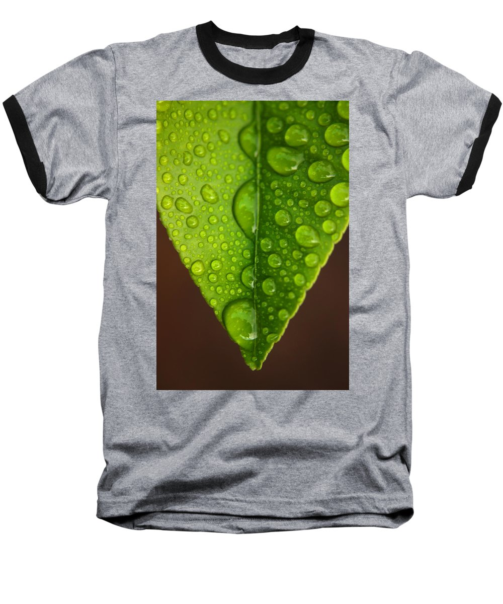 Leaf Baseball T-Shirt featuring the photograph Water Droplets On Lemon Leaf by Ralph A Ledergerber-Photography
