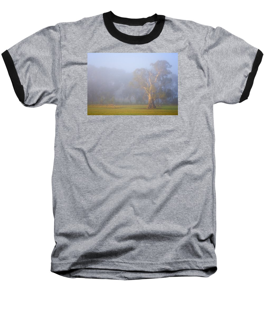 Tree Baseball T-Shirt featuring the photograph White Gum Morning by Mike Dawson