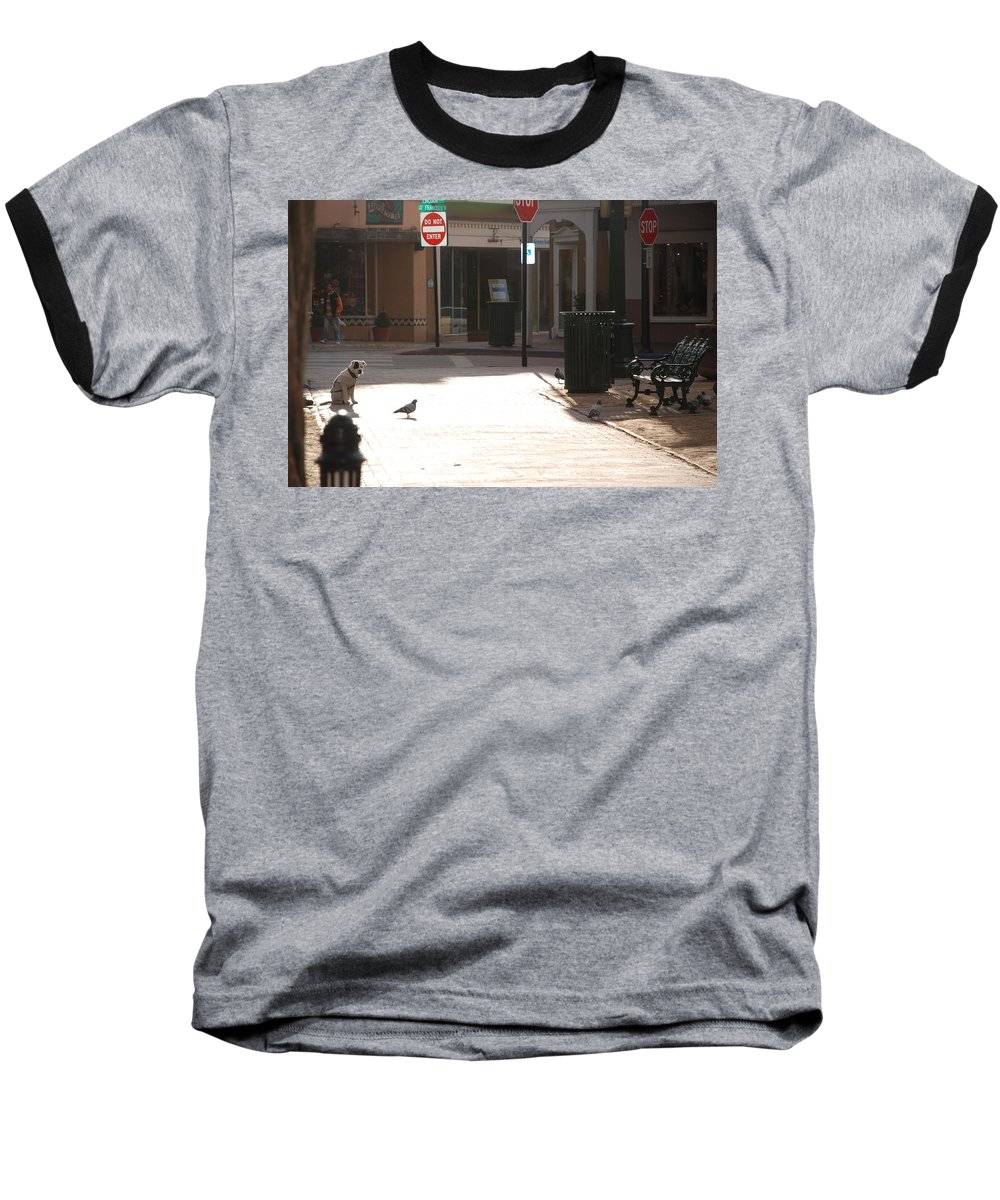 Dog Baseball T-Shirt featuring the photograph Why Question Mark by Rob Hans