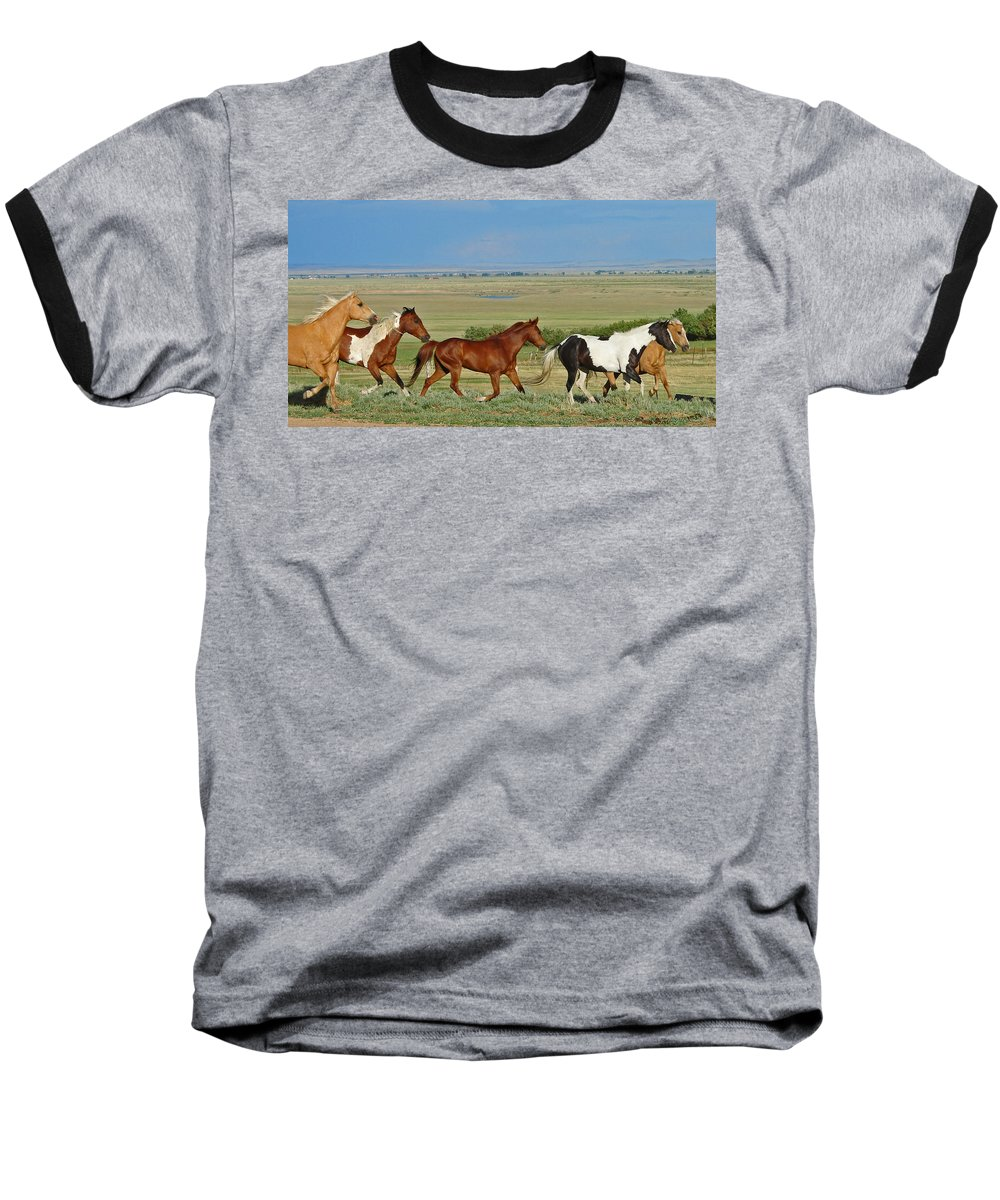 Herd Baseball T-Shirt featuring the photograph Wild Horses Wyoming by Heather Coen
