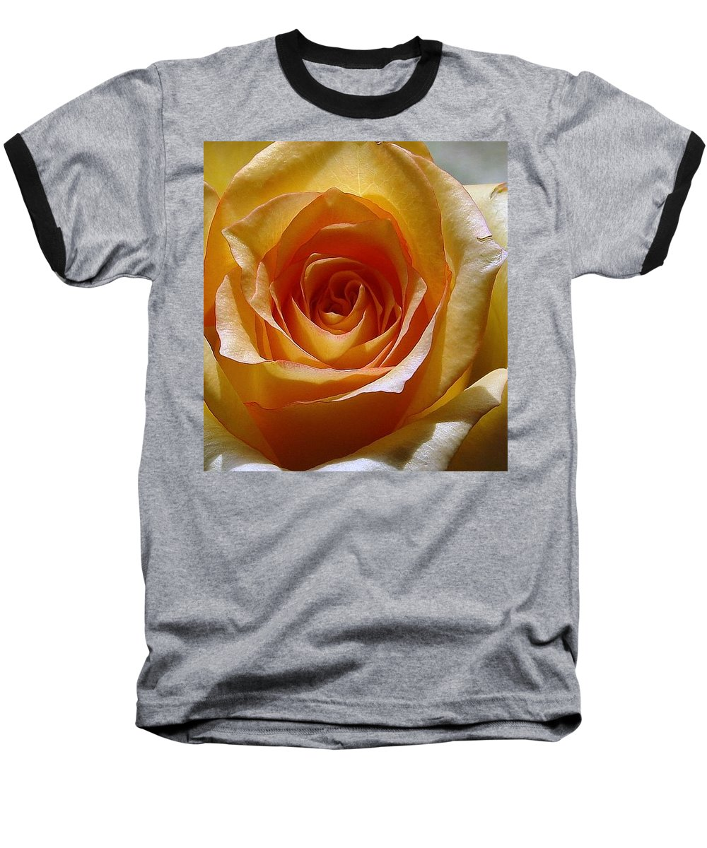 Rose Yellow Baseball T-Shirt featuring the photograph Yellow Rose by Luciana Seymour