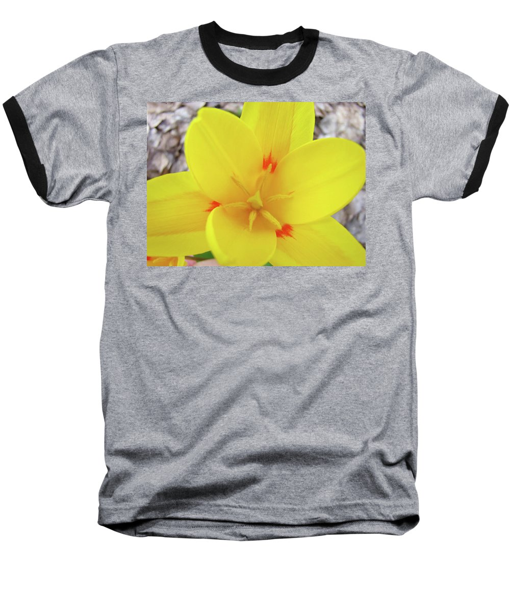 �tulips Artwork� Baseball T-Shirt featuring the photograph Yellow Tulip Flower Spring Flowers Floral Art Prints by Baslee Troutman