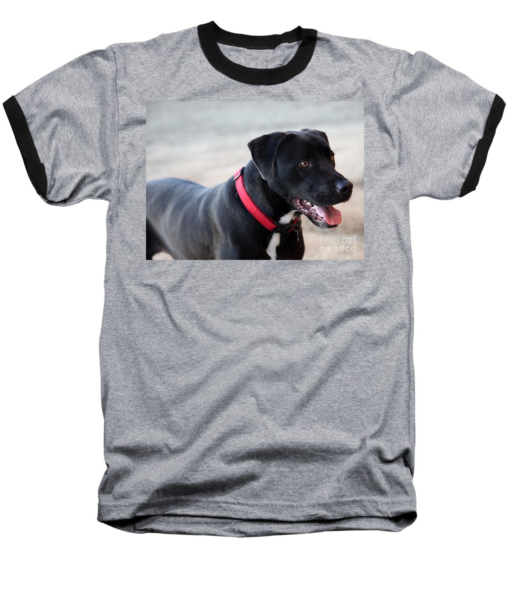 Dogs Baseball T-Shirt featuring the photograph Yes I Want To Play by Amanda Barcon