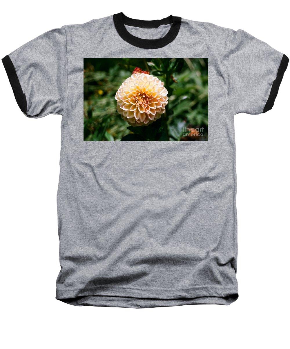 Zinnia Baseball T-Shirt featuring the photograph Zinnia by Dean Triolo