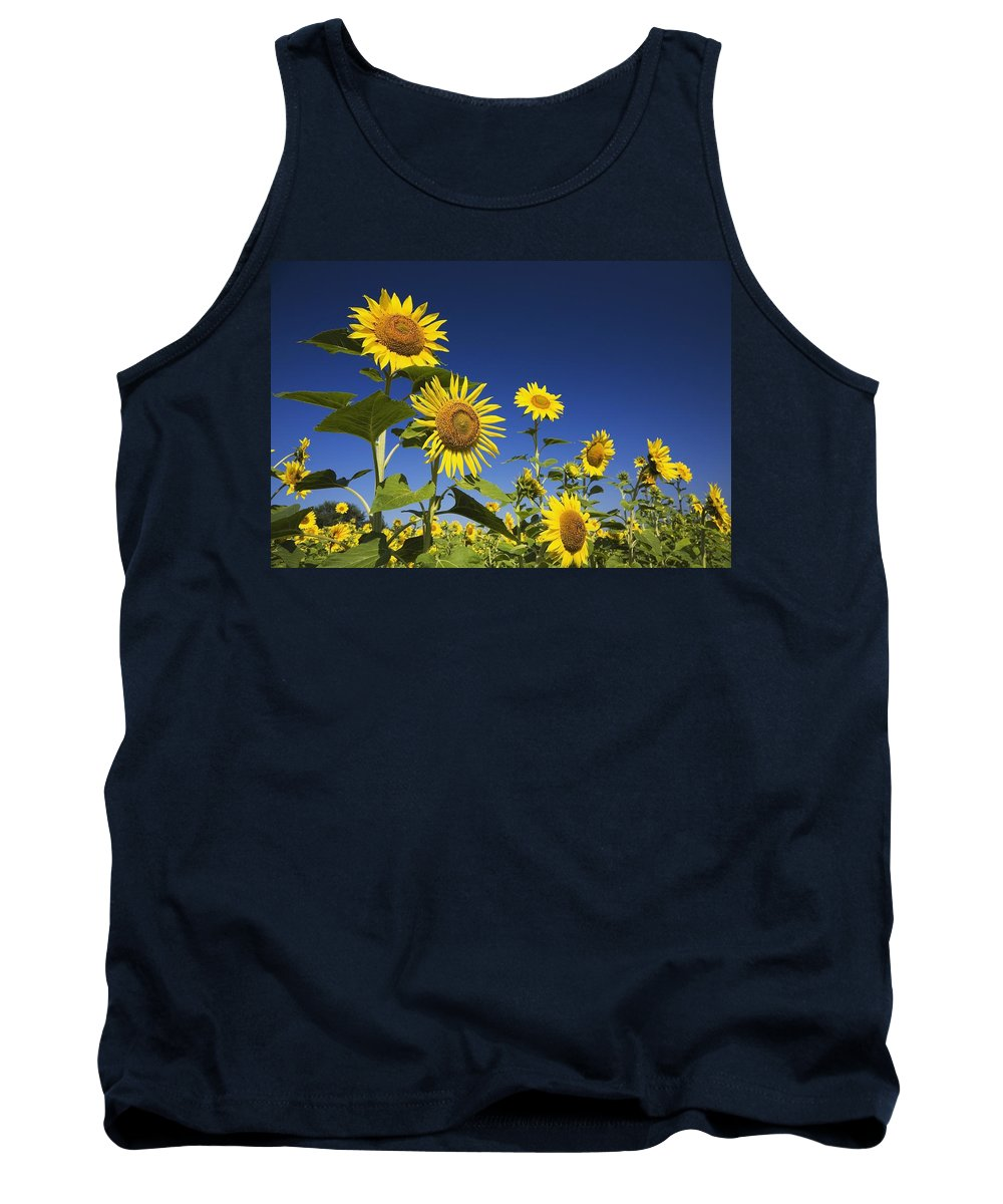 Blue Sky Tank Top featuring the photograph Laval, Quebec, Canada Sunflowers by Perry Mastrovito