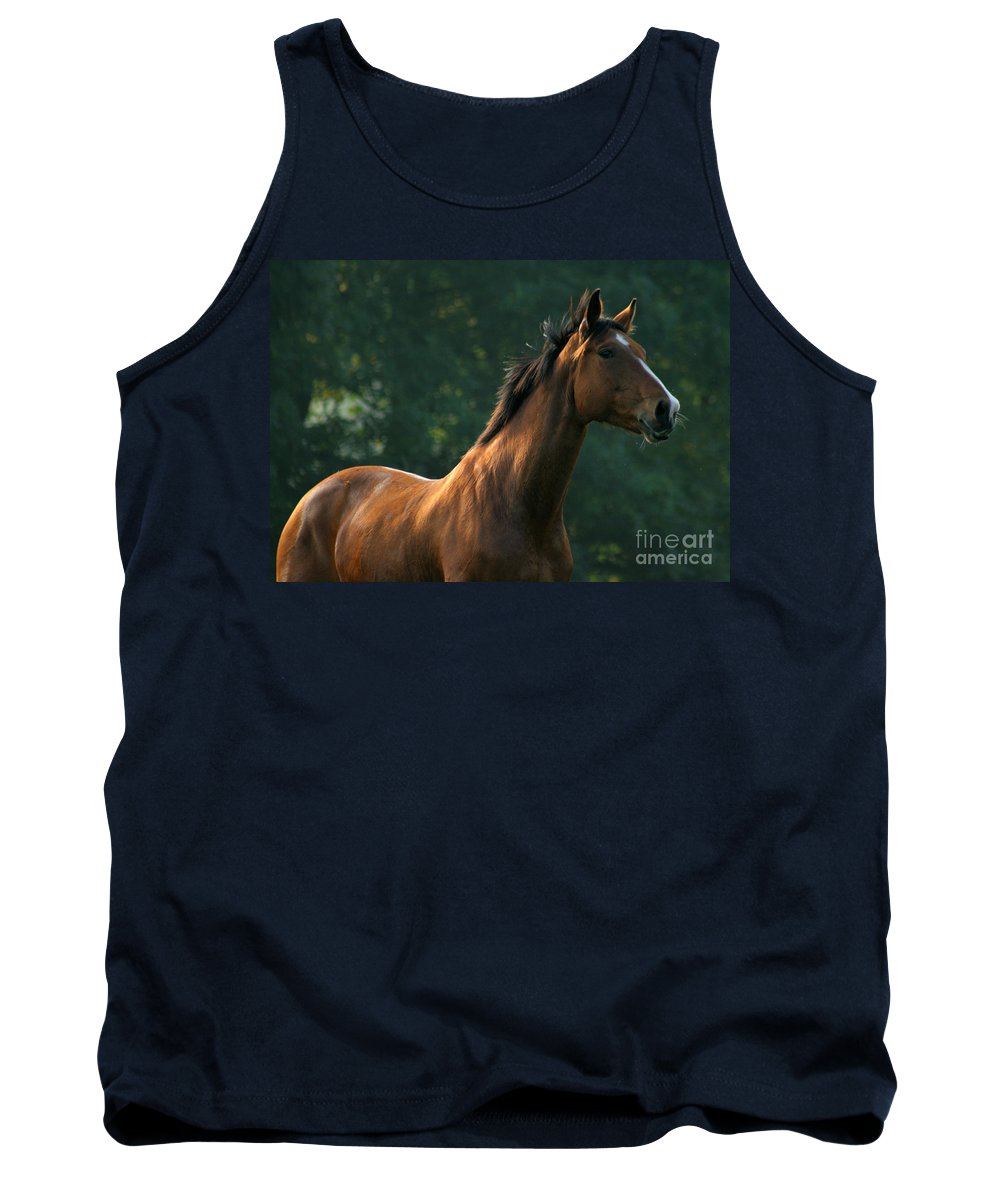 Horse Tank Top featuring the photograph The Observer by Angel Ciesniarska