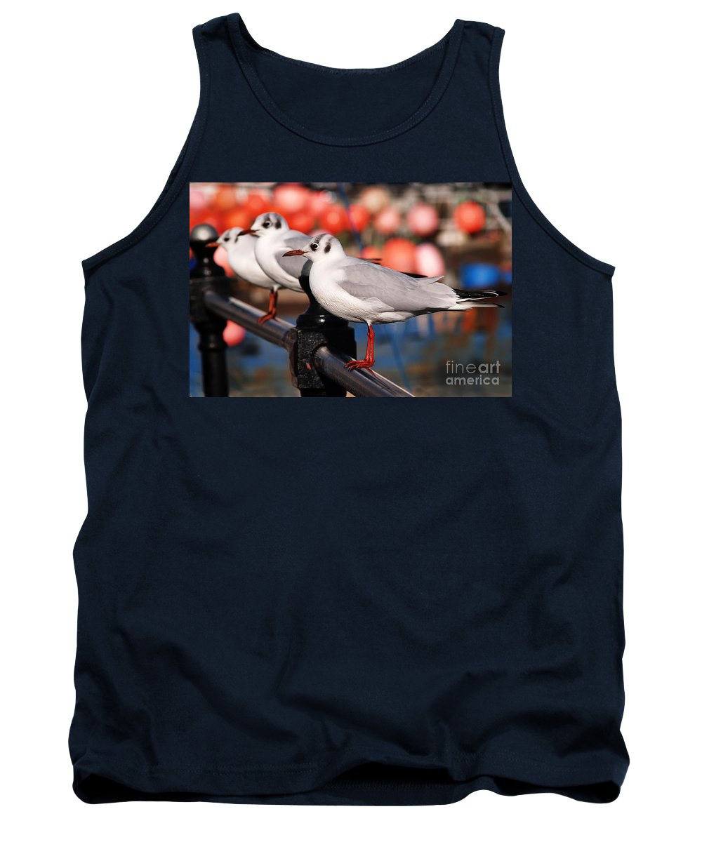 Black-headed Gulls Tank Top featuring the photograph Black-headed Gulls by Susie Peek