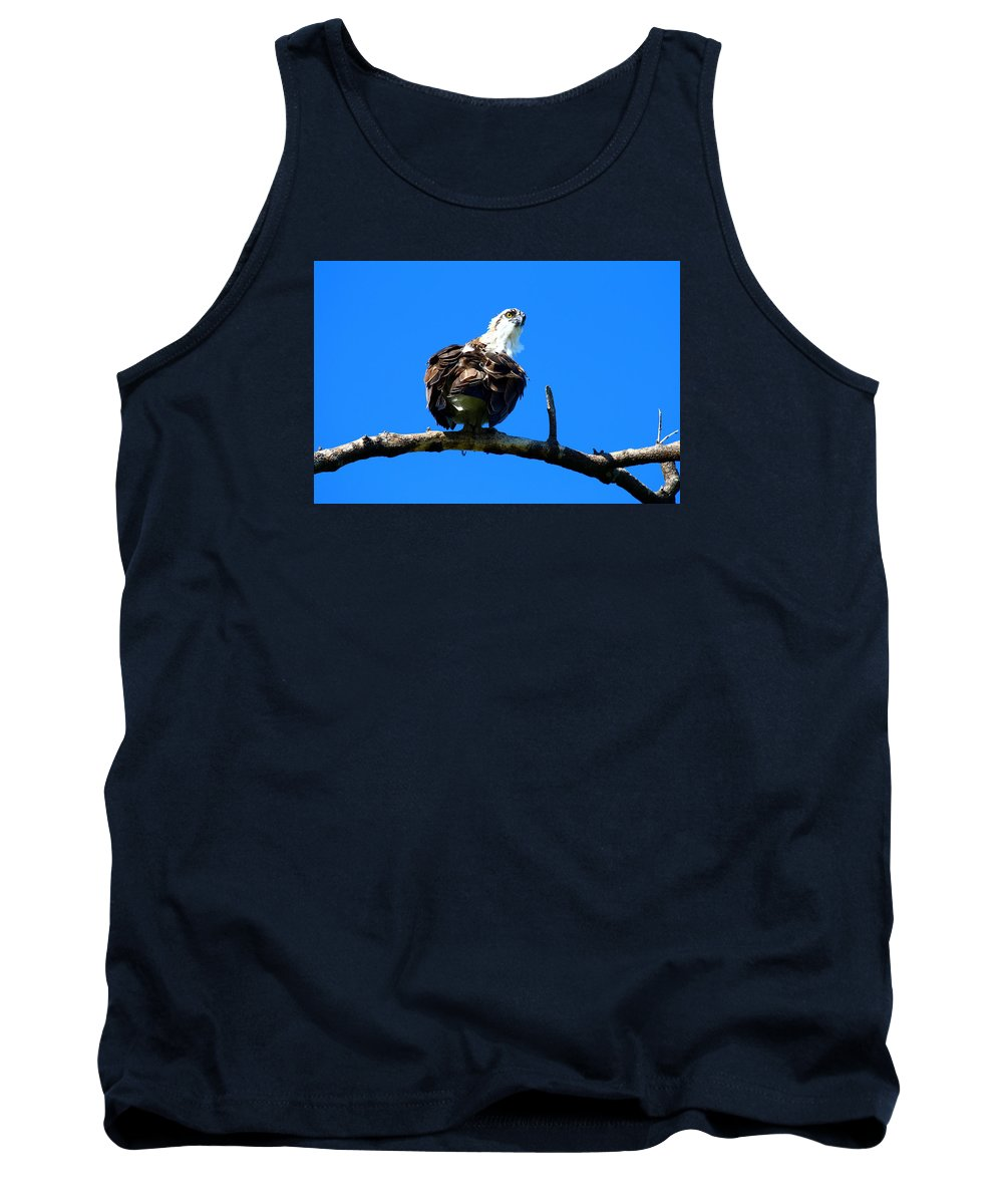 Osprey Tank Top featuring the photograph Osprey On A Branch by Christiane Schulze Art And Photography