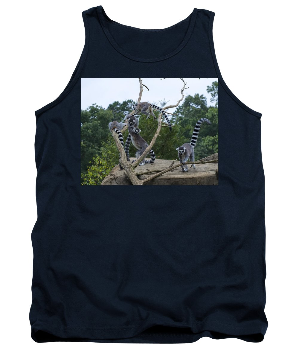 Ring Tailed Lemurs Tank Top featuring the digital art Ring Tailed Lemurs Playing by Chris Flees