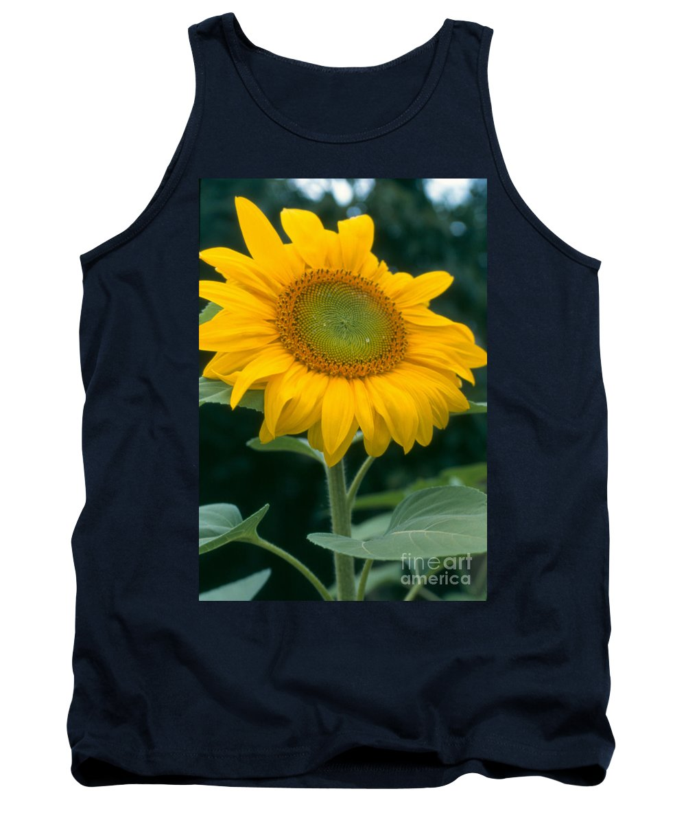 Flower Tank Top featuring the photograph Sunflower In Seattle by Heather Kirk