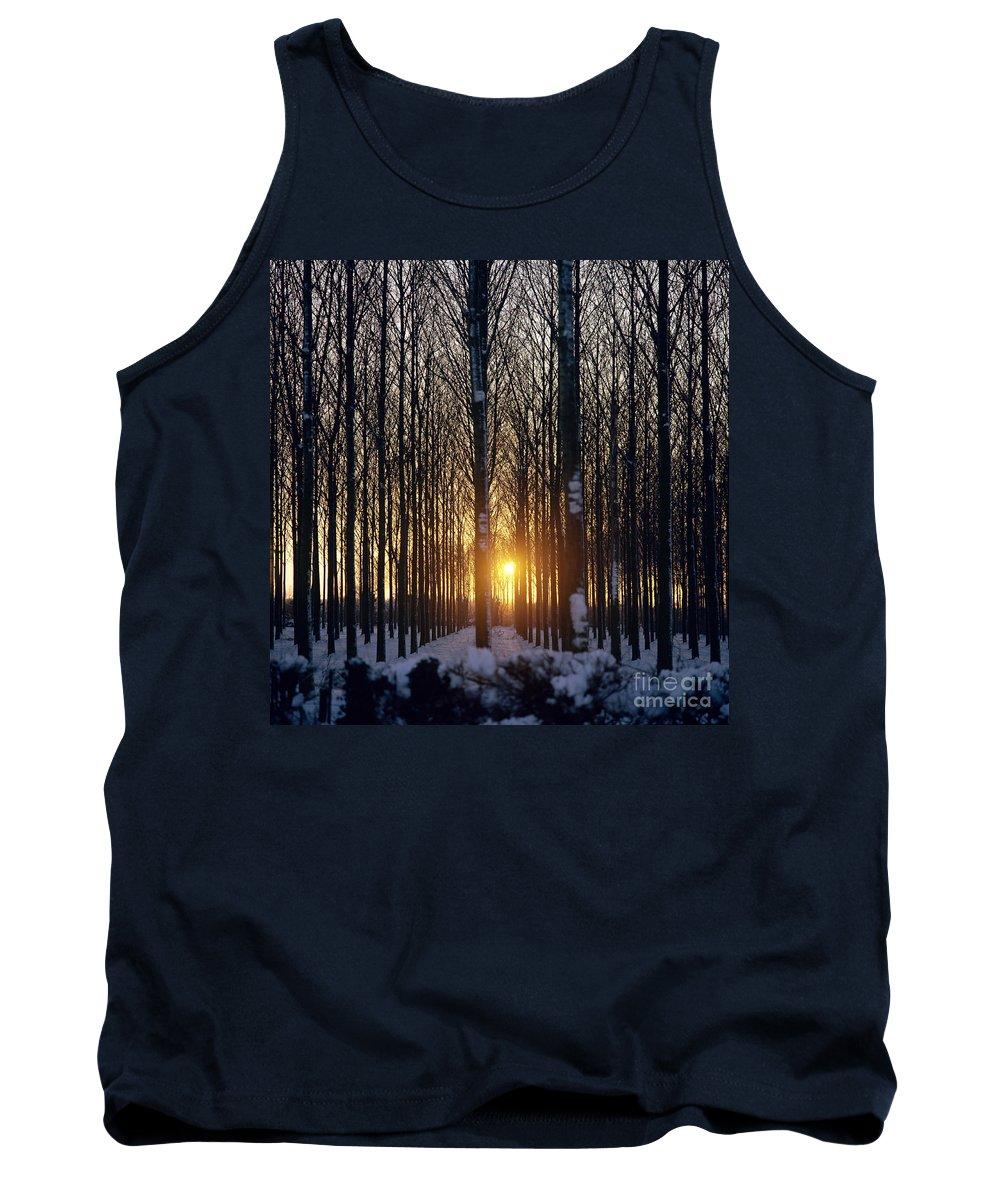 Woods Tank Top featuring the photograph Winter Sunset Through The Trees by Robert Hallmann
