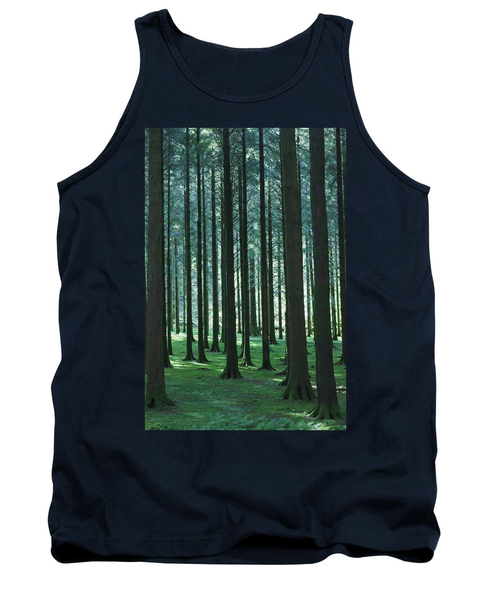 Forest Tank Top featuring the photograph Woodland Scene In Gougane Barra Forest by Ken Welsh