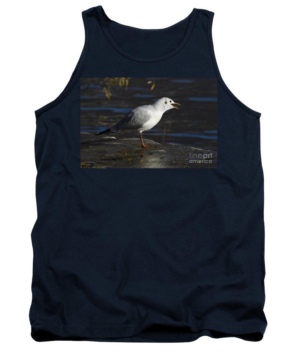 Seagull Tank Top featuring the photograph Talking Bird by Mats Silvan