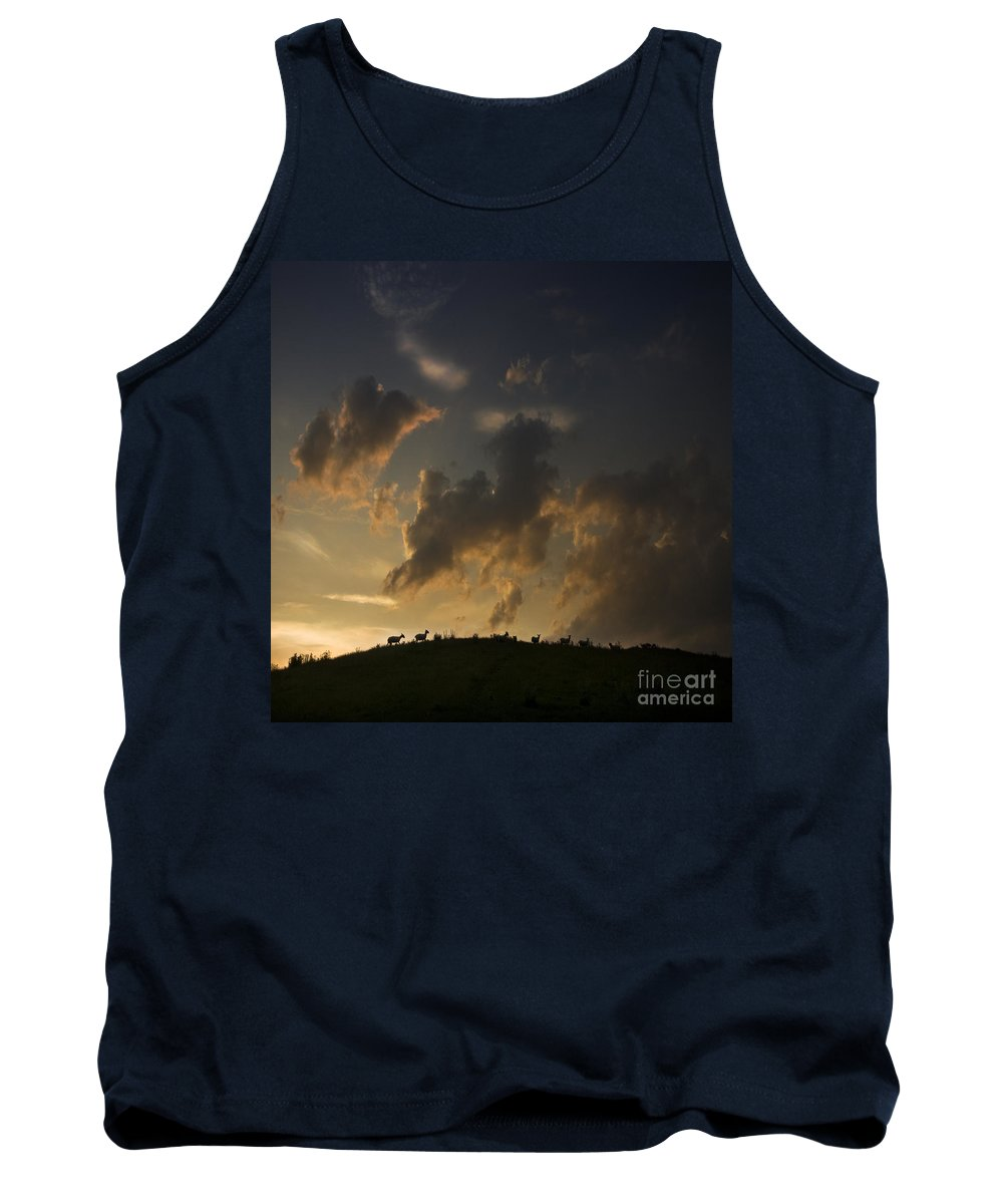 Sheep Tank Top featuring the photograph Counting The Sheep Before Sleeping by Angel Ciesniarska