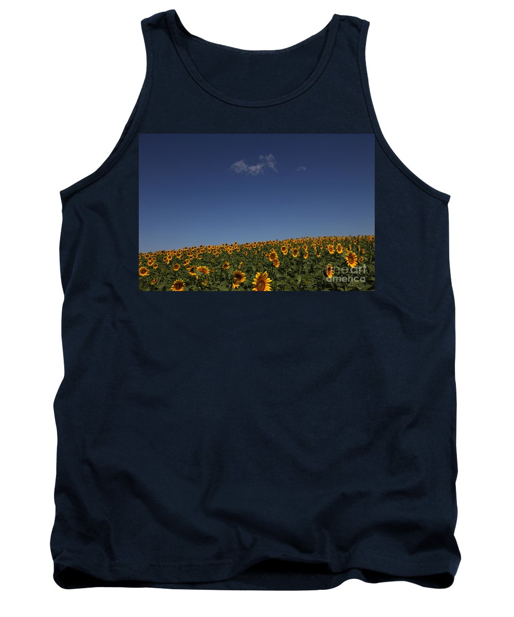 Sunflowers Tank Top featuring the photograph Curvature by Amanda Barcon