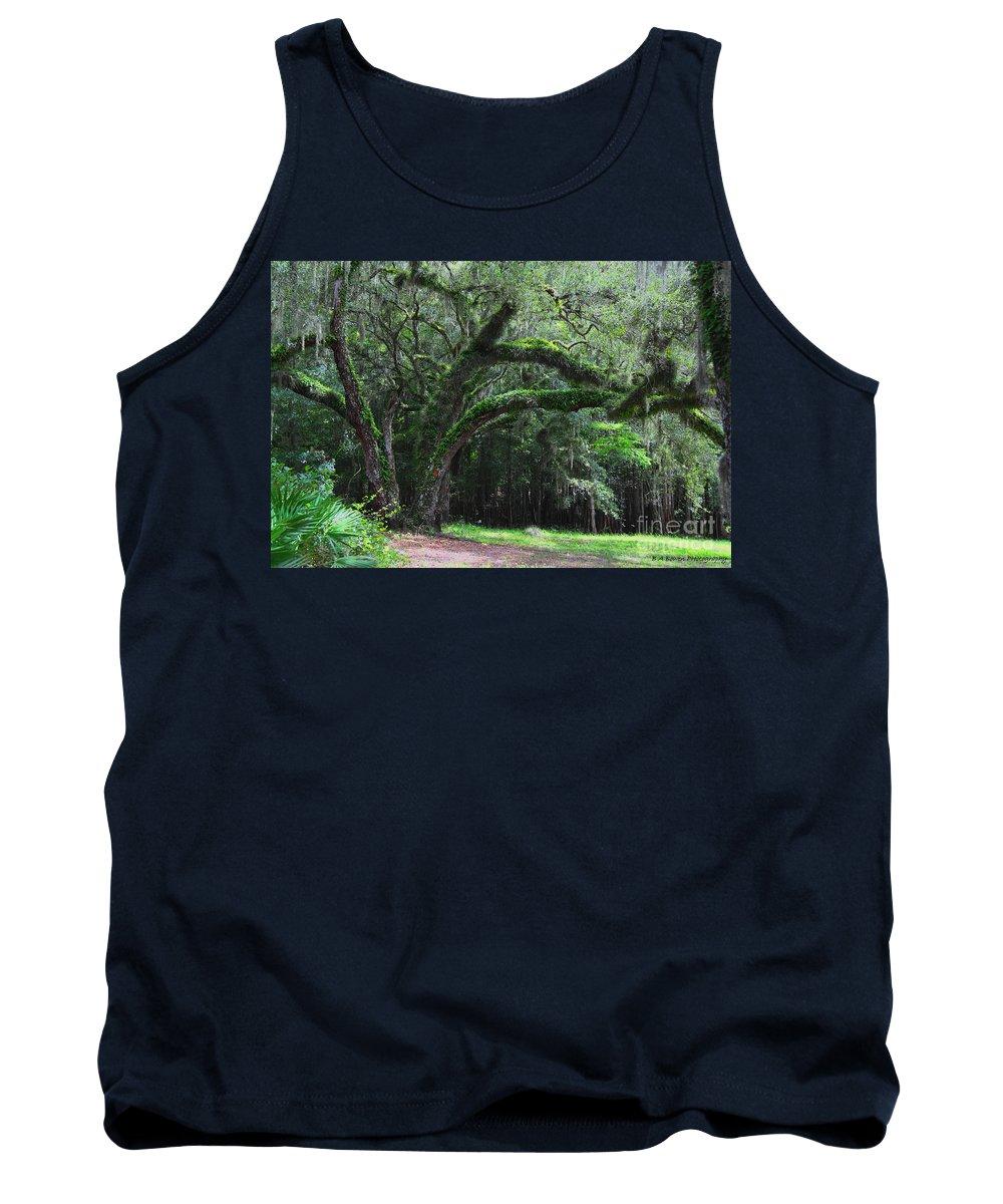 Oak Tree Tank Top featuring the photograph Majestic Fern Covered Oak by Barbara Bowen