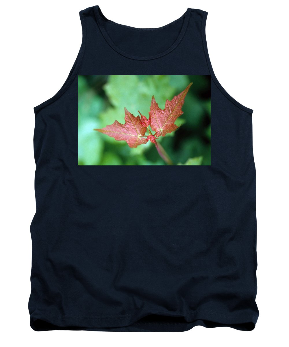 Maple Leaf Tank Top featuring the photograph Maple Red And Green by Laurie Paci