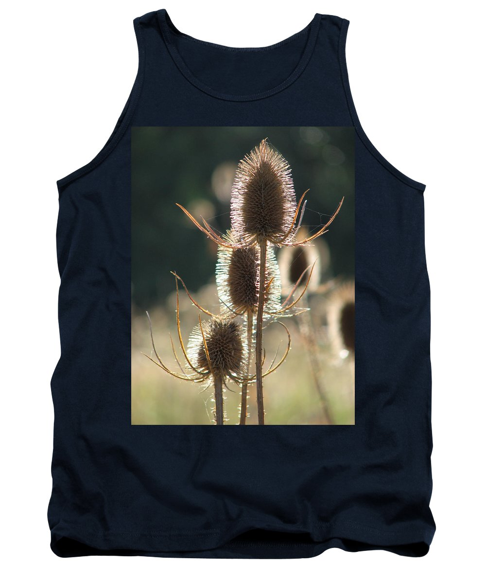Teasle Tank Top featuring the photograph Teasle In Morning Light by Bob Kemp
