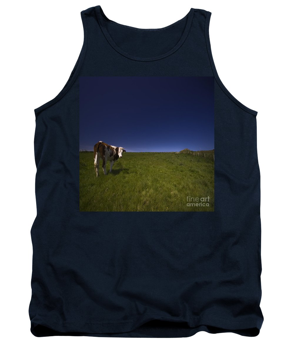 Cow Tank Top featuring the photograph The Moody Cow by Angel Ciesniarska