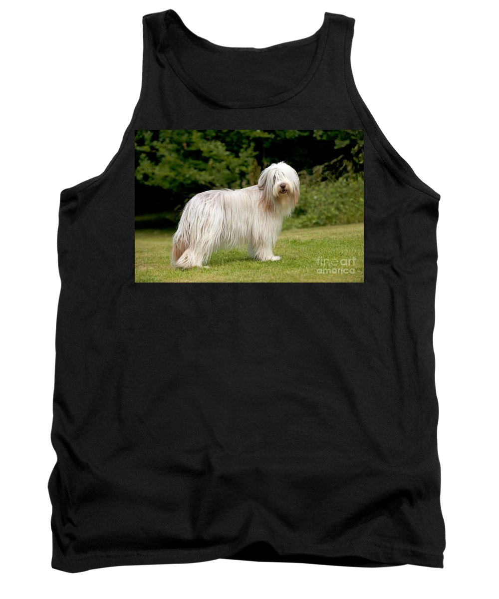 Bearded Collie Tank Top featuring the photograph Bearded Collie Dog by John Daniels