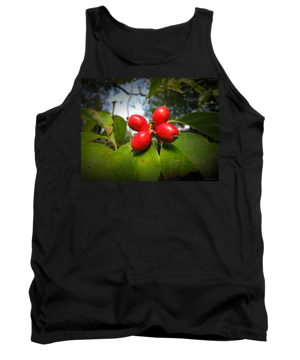 Nature Tank Top featuring the photograph Dogwood Berries by Matt Taylor