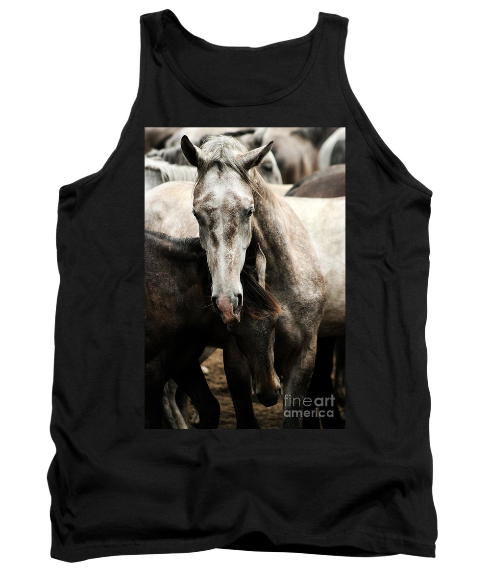 Horse Tank Top featuring the photograph Fighting by Angel Ciesniarska