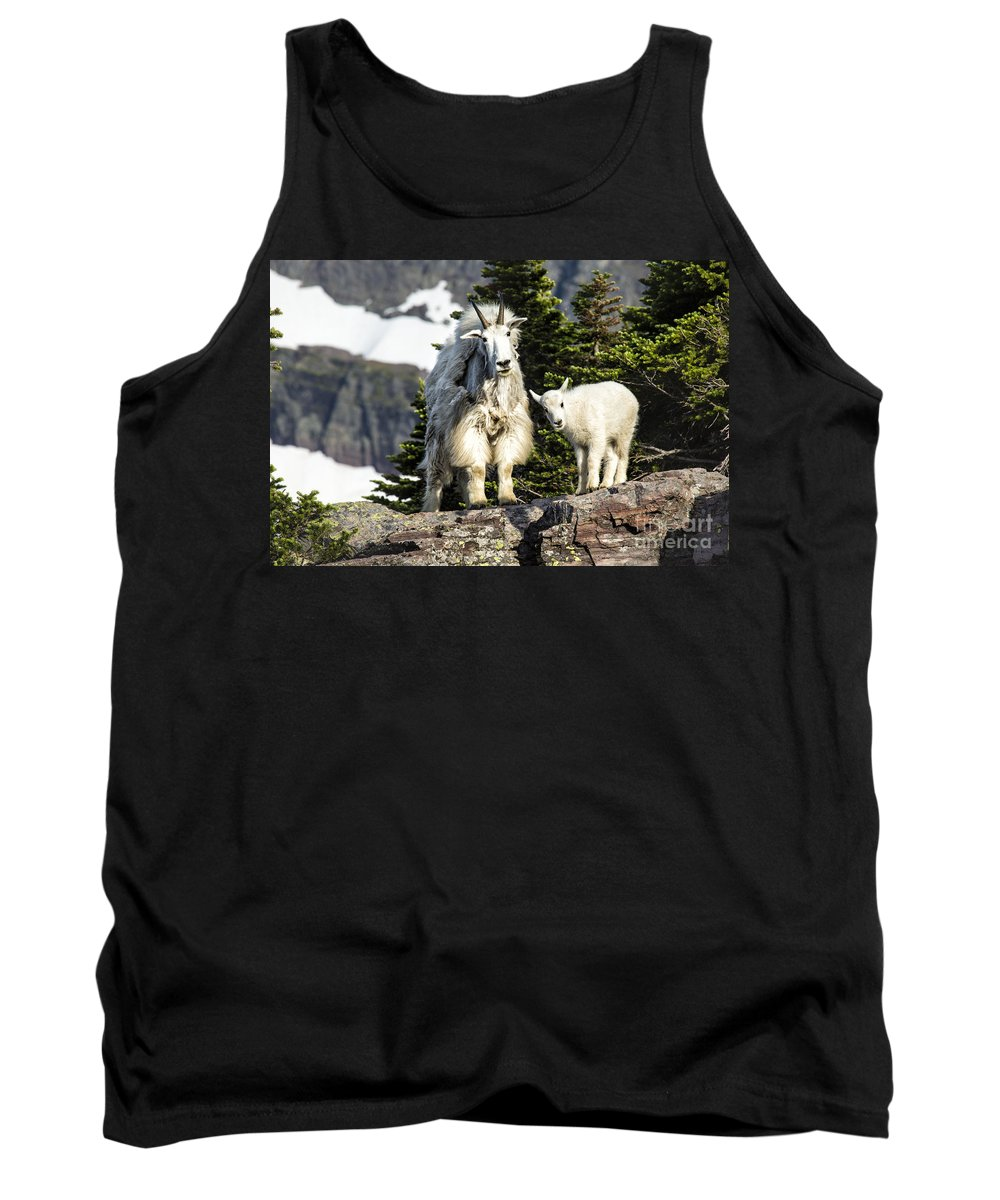 Glacier Tank Top featuring the photograph Look Here by Timothy Hacker