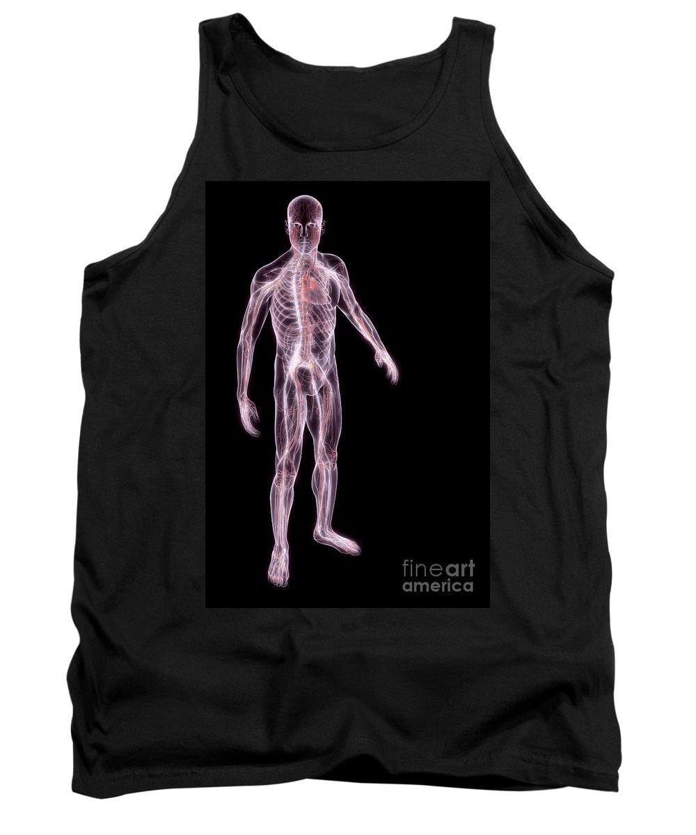 Central Nervous System Tank Top featuring the photograph Male Anatomy by Science Picture Co