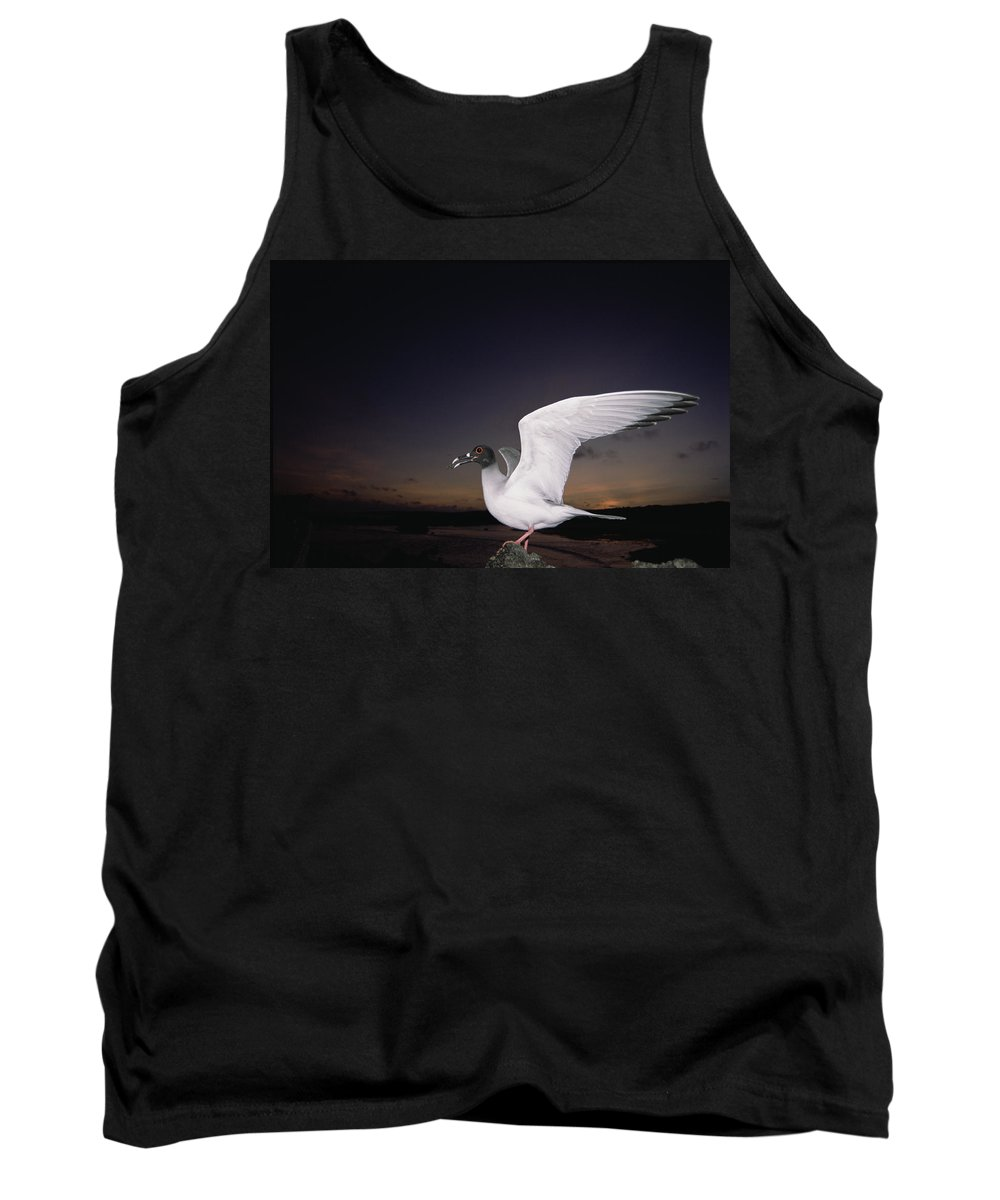 Feb0514 Tank Top featuring the photograph Swallow-tailed Gull Departs At Dusk by Tui De Roy