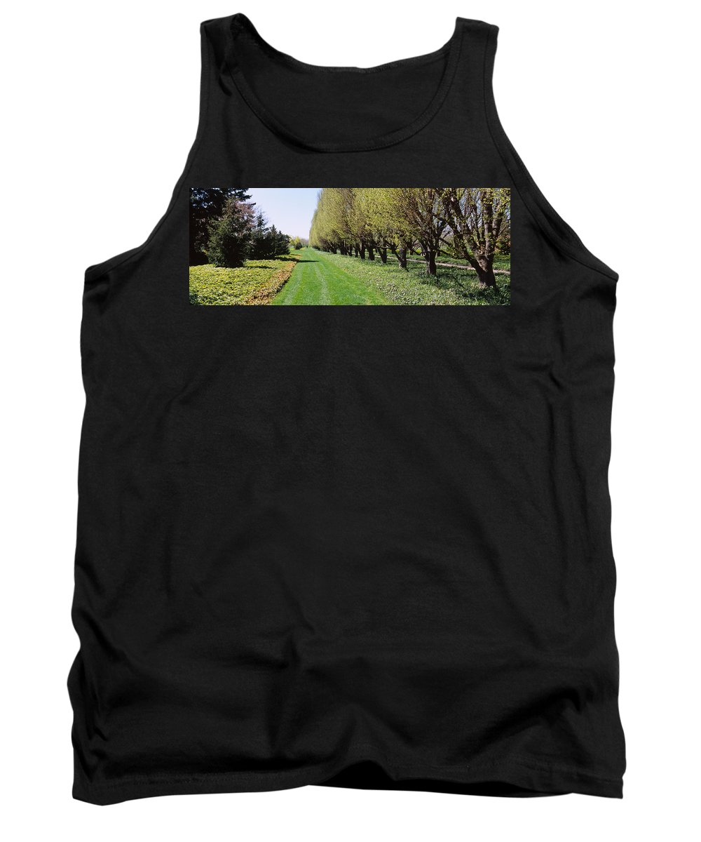 Photography Tank Top featuring the photograph Trees Along A Walkway In A Botanical by Panoramic Images