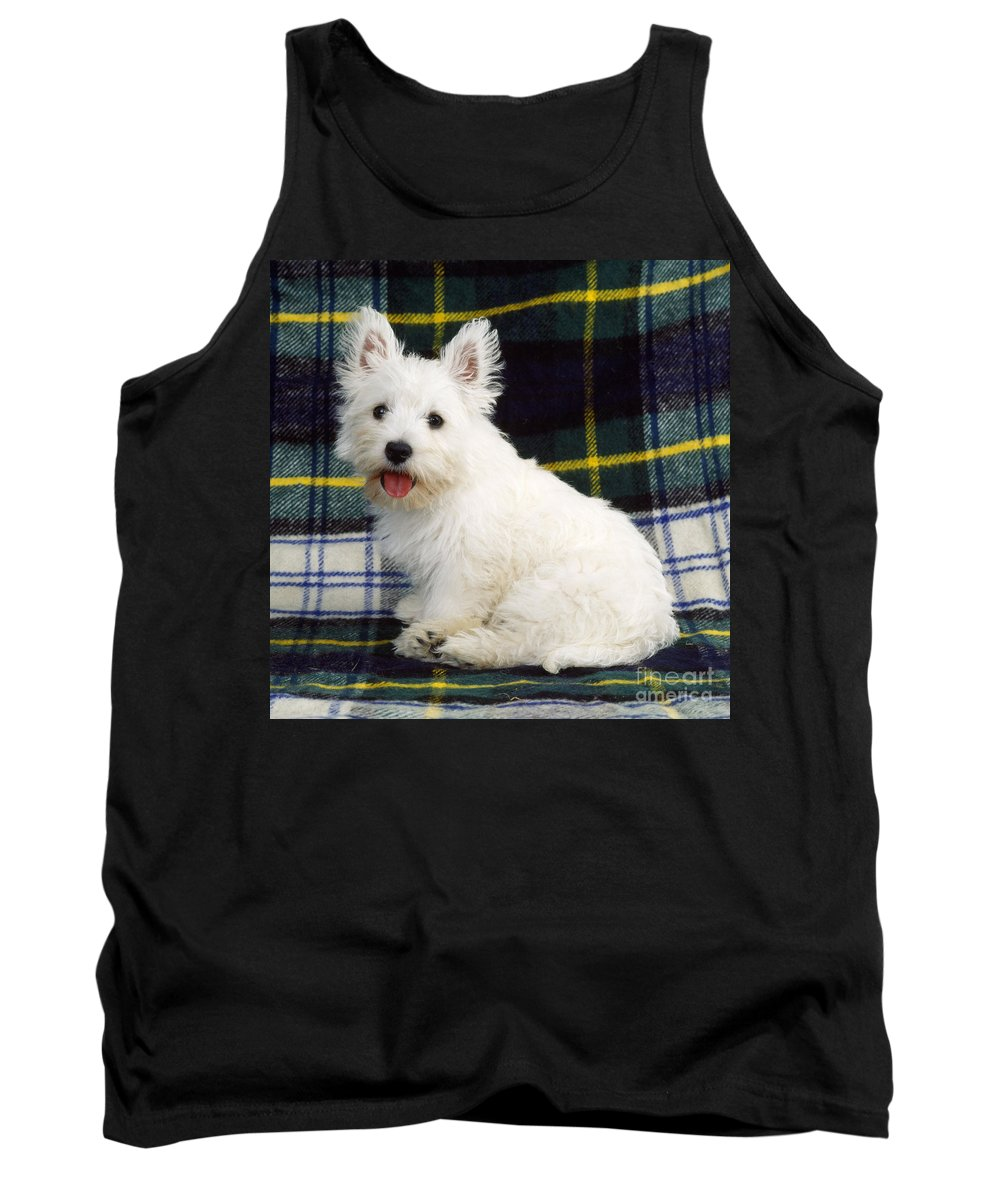 West Highland White Terrier Tank Top featuring the photograph West Highland White Terrier Puppy by John Daniels