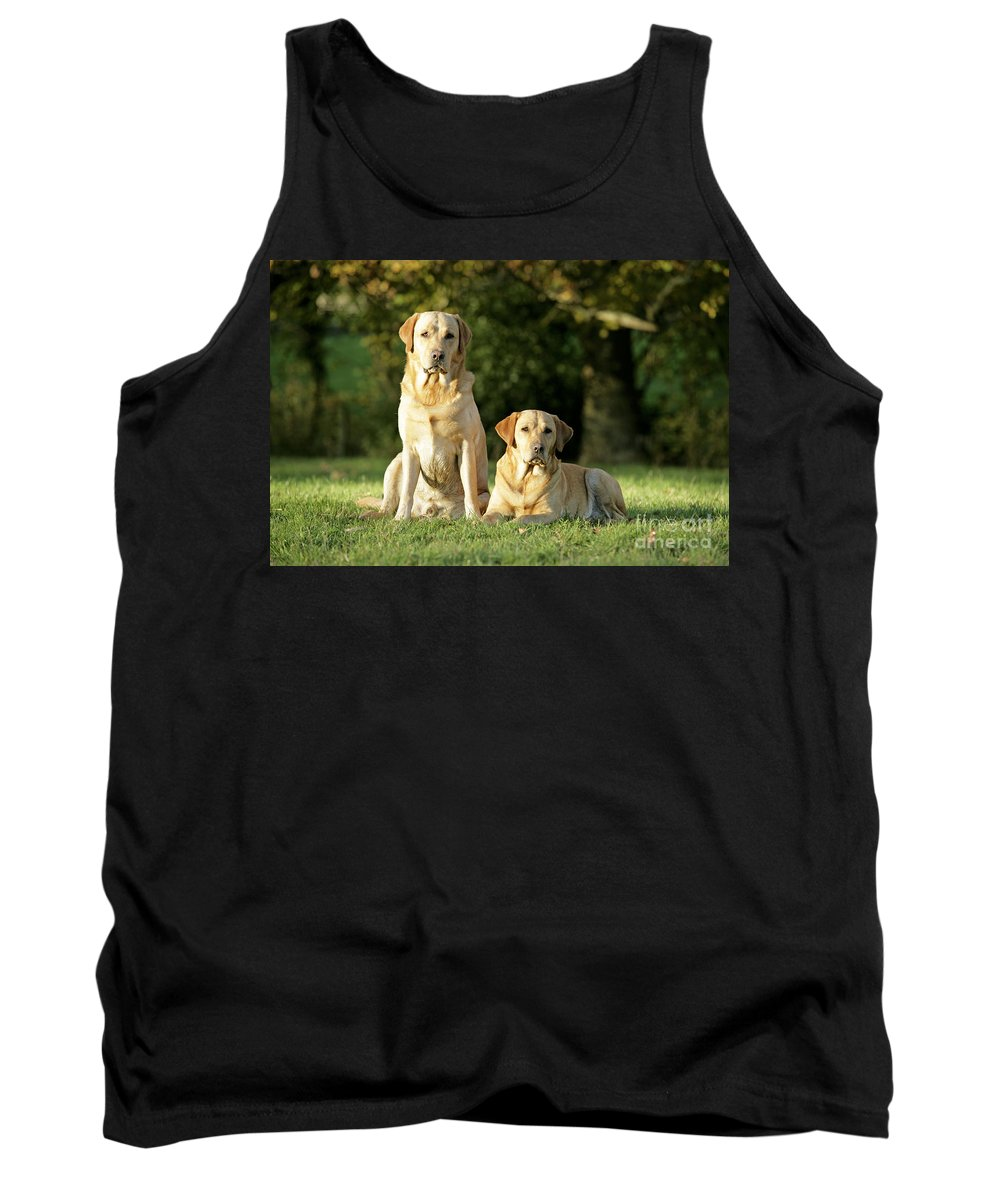 Dogs Tank Top featuring the photograph Yellow Labrador Retrievers by John Daniels