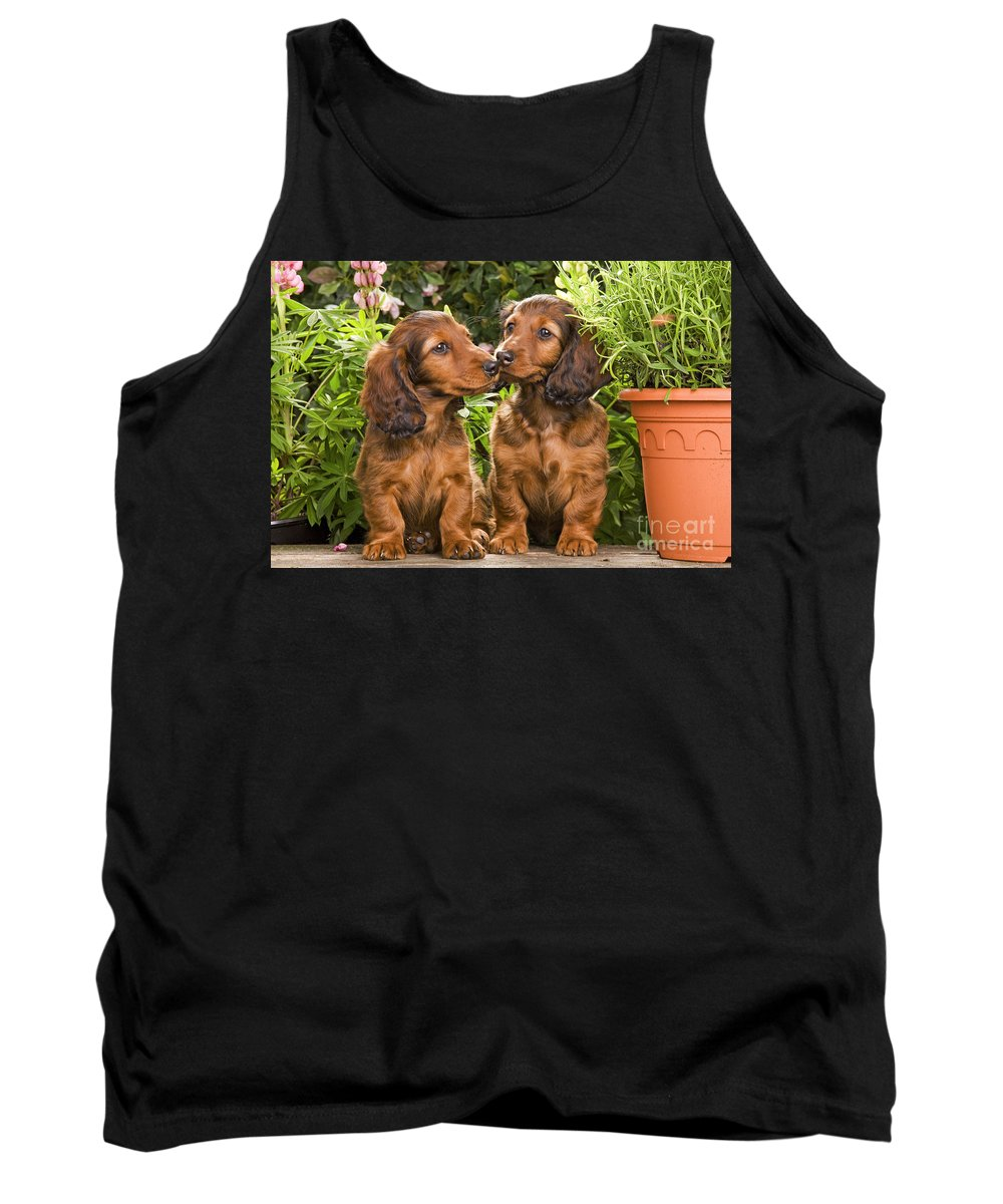 Long-haired Dachshund Tank Top featuring the photograph Long-haired Dachshunds by Jean-Michel Labat