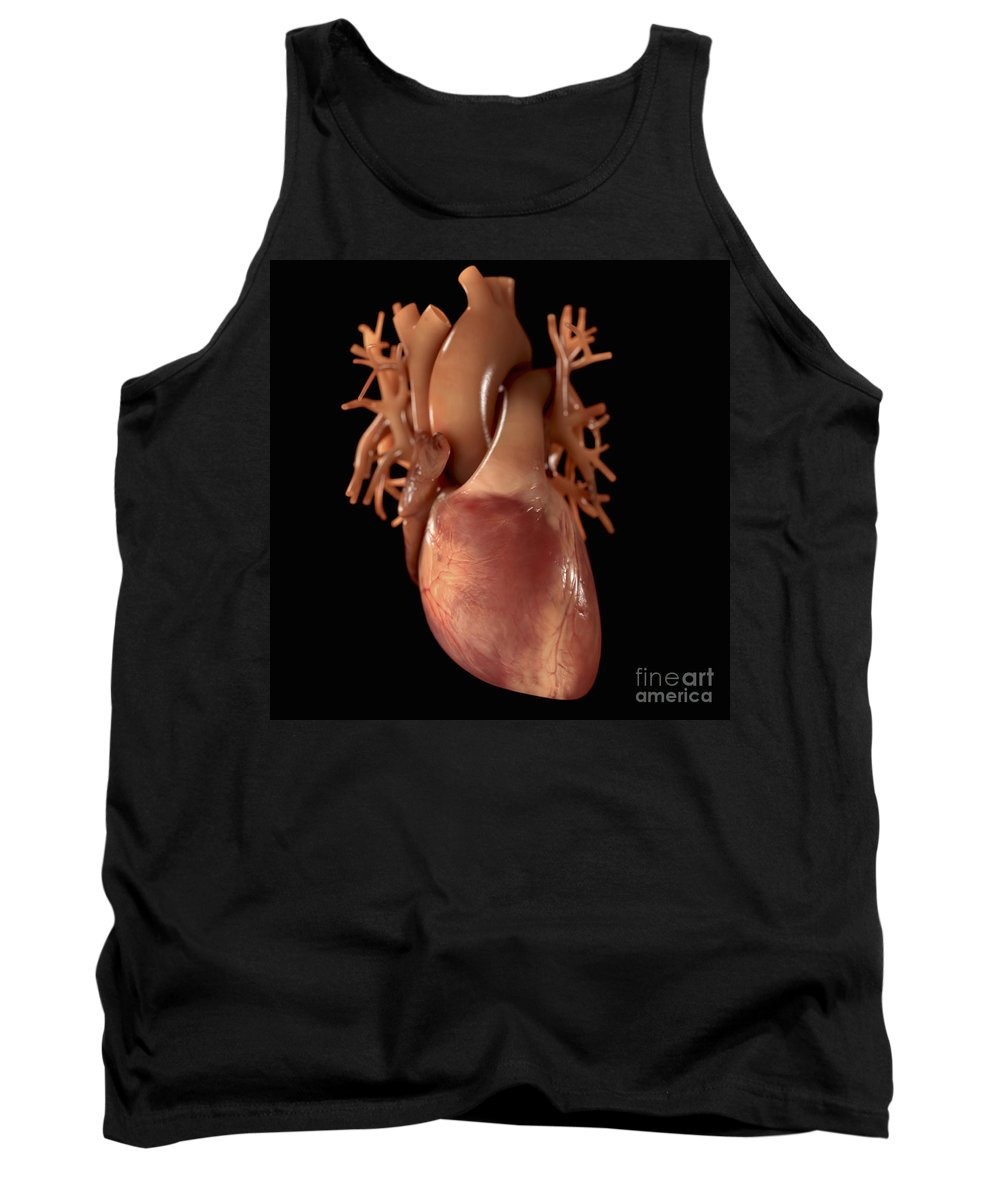 Organ Tank Top featuring the photograph Heart Anatomy by Science Picture Co