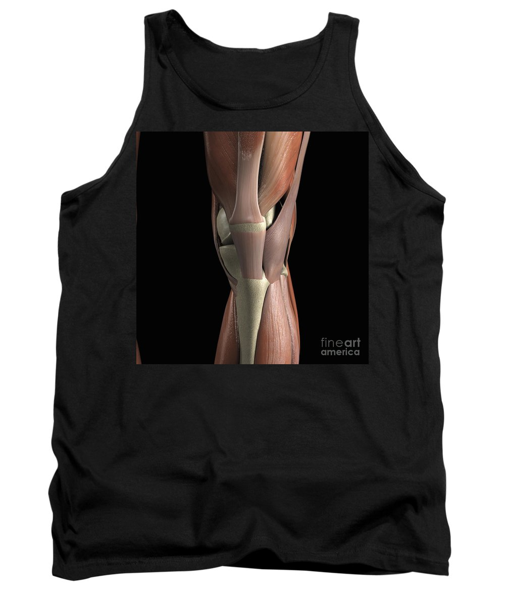 3d Visualisation Tank Top featuring the photograph Muscles Of The Knee by Science Picture Co