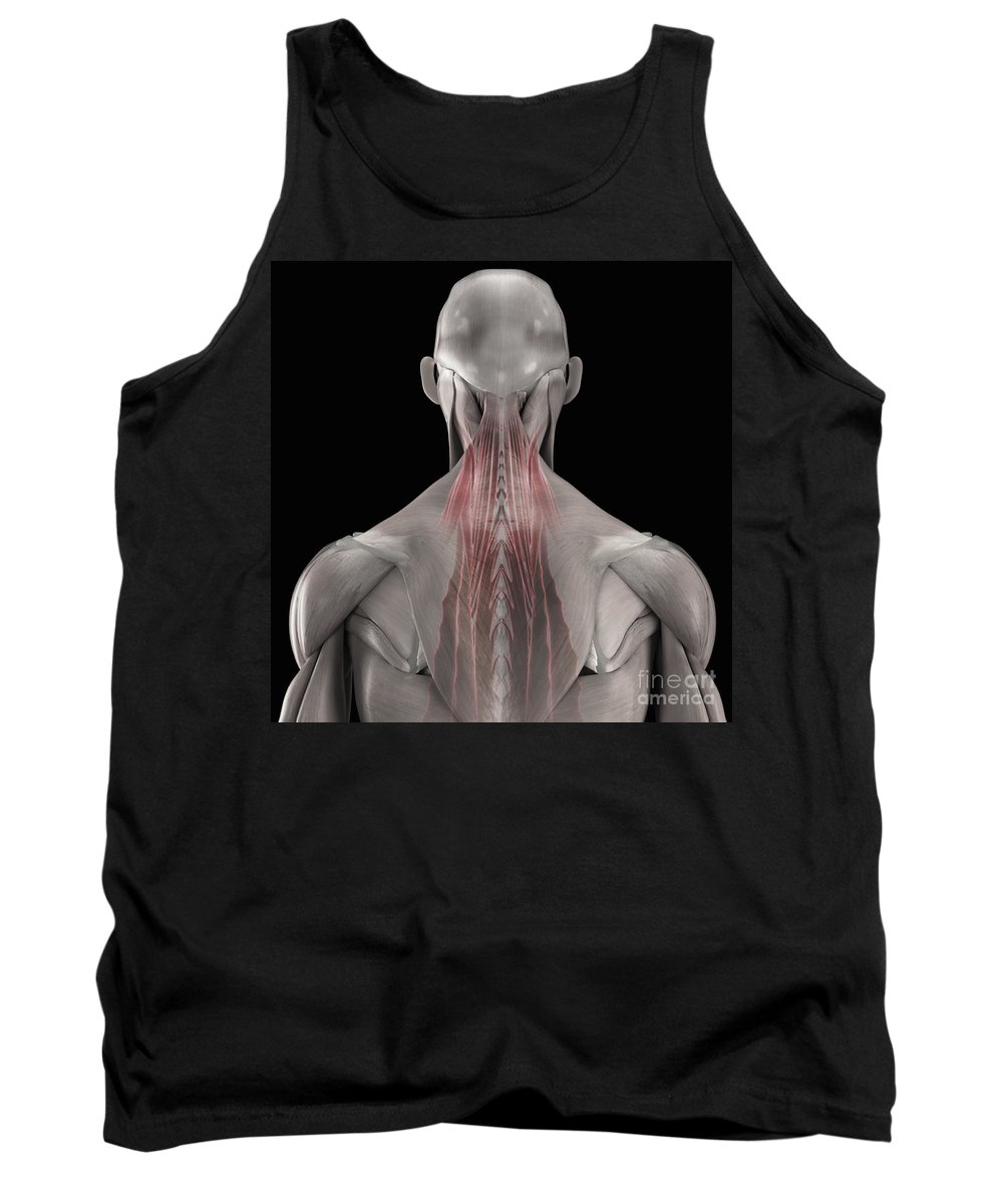 3d Visualization Tank Top featuring the photograph The Muscles Of The Back by Science Picture Co