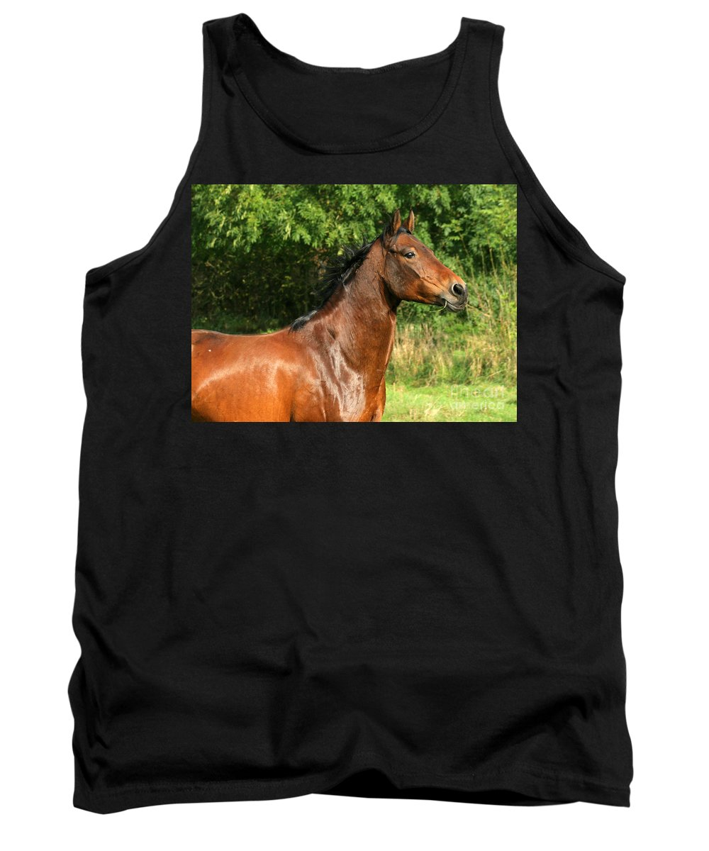 Horse Tank Top featuring the photograph The Bay Horse by Angel Ciesniarska