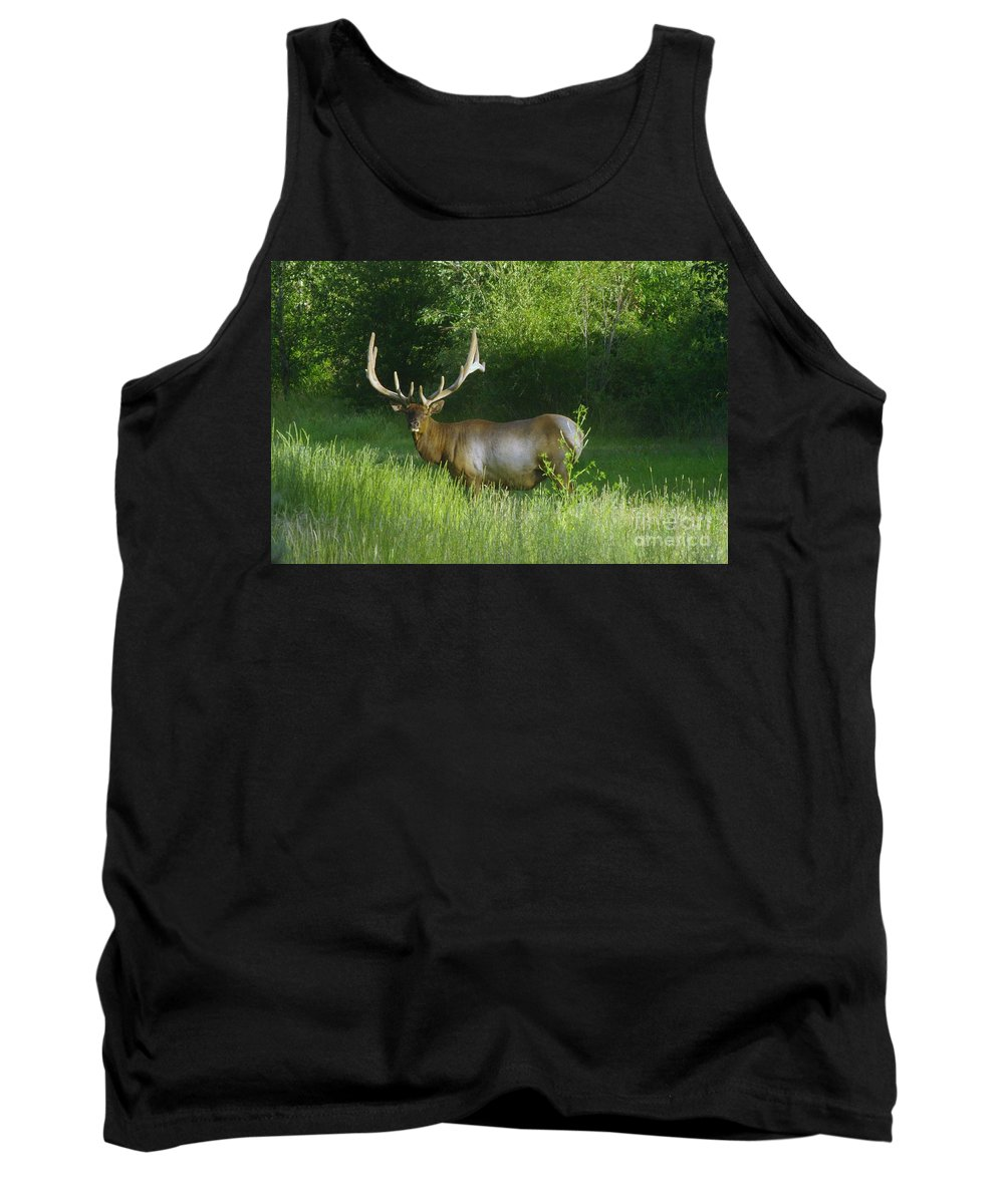Animals Tank Top featuring the photograph A Big Wide Rack by Jeff Swan