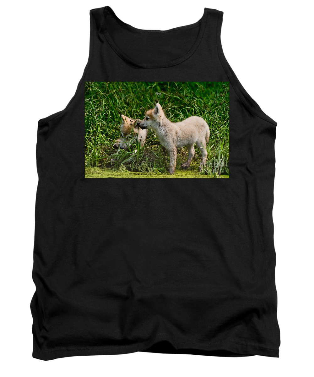 Arctic Wolf Tank Top featuring the photograph Arctic Wolf Pictures 347 by Wolves Only